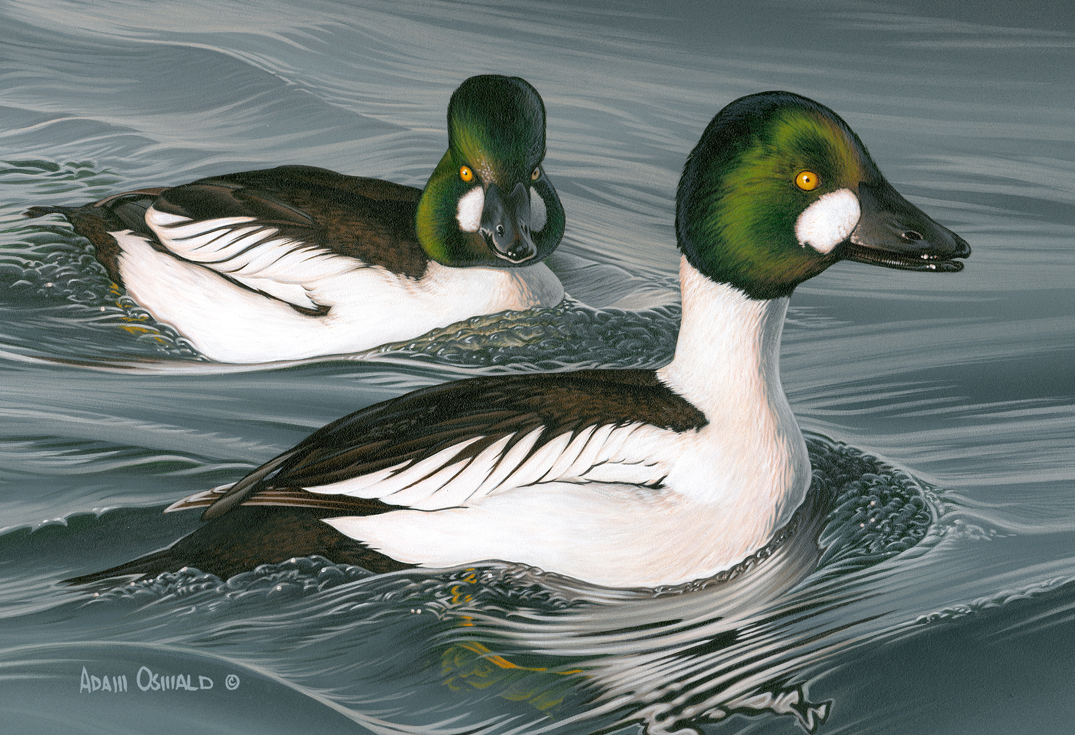 2012 Federal Duck Stamp Entry