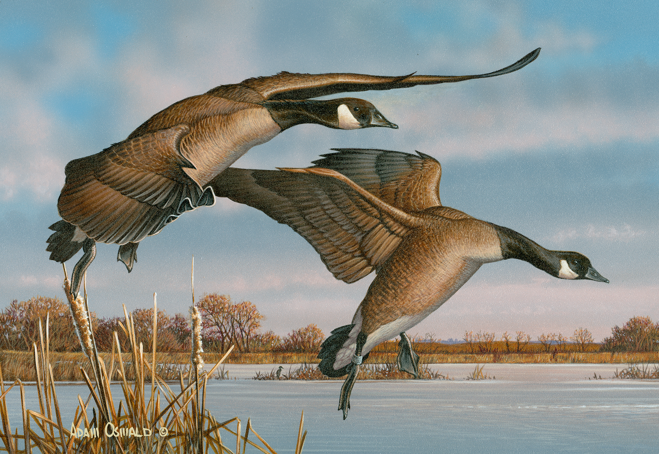 2014 Federal Duck Stamp Entry